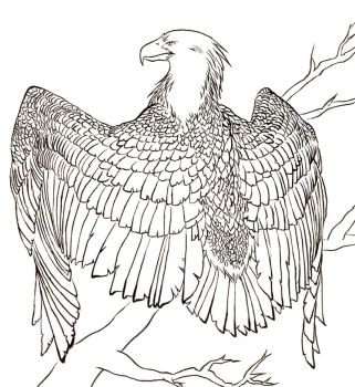 Eagle -lineart- by A2wildFox