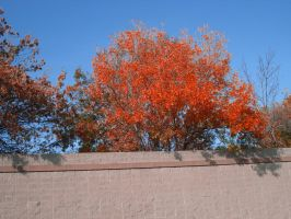 Colourful Tree - Stock by Ravens-Stock