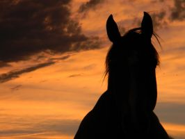Horse Silhouette by Amber-Loves-Horses