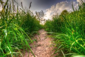 Hidden Path by em3L