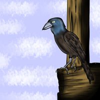 Grackle by Demonic-stickfigures