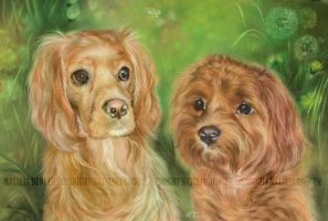 Two Dogs by Acacia13