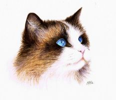 Ragdoll Painting by Atarial