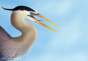 The great blue heron by UszatyArbuz