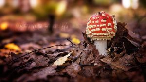 Amanita Muscaria WP by Omelettu