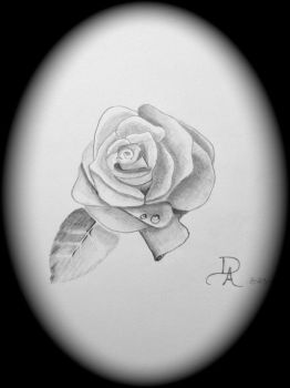 Dewey Rose by Divine-Inspirations1