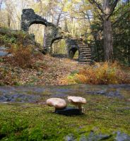 Stone Stairs and toadstools by mirengraphics