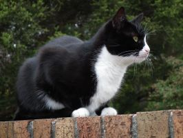 Cat on a Brick Wall by BrendanR85