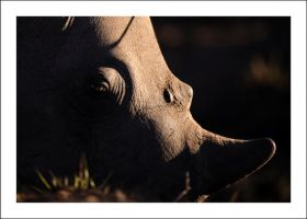 Rhino abstract by alecd