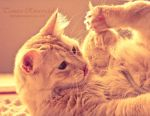 Whimsical kitty by TammyPhotography
