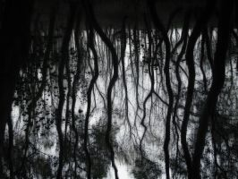 Roots by InterSect