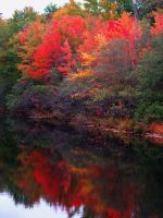 Autumn in Connecticut by davincipoppalag