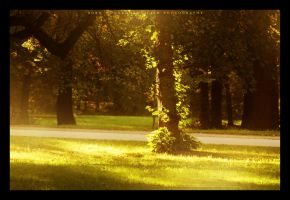 Dresden summer I. by FaiblesseDesSens