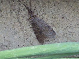 gray moth by ColorBug
