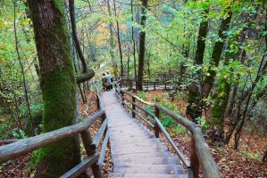 Autumn Forest Stairs by SmileyG