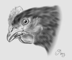 chicken :) by mary3m