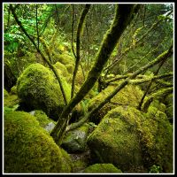 Mossy Rocks by xedgerx