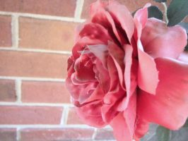 Roses 1 by bethrainbow