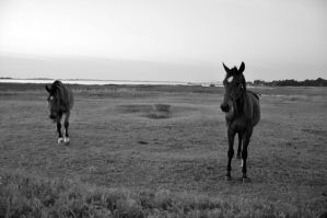 horses by w-p