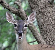 Smiling for the Camera by embethe