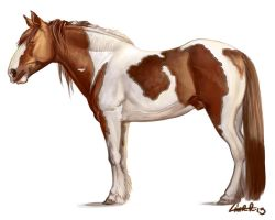 Tobiano Draft Horse Study by CharReed