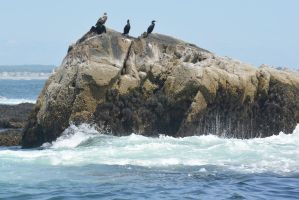 On the Rocks, Cormorants 2 by Miss-Tbones