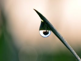 The world in a drop by tomsumartin