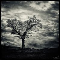 Solitary tree by DrumsOfWar
