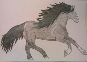 shire horse by noonfeather