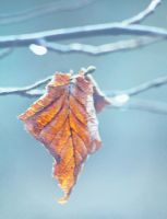 .November. by gin-sui