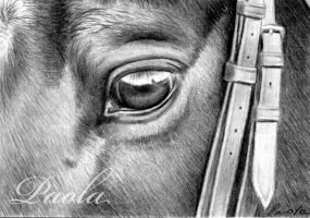 horse eye ACEO by skippypoof