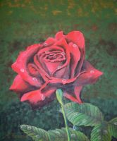 Red rose by TeresaOstbye