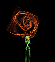 A Glass Rose. by silhouettenightgust
