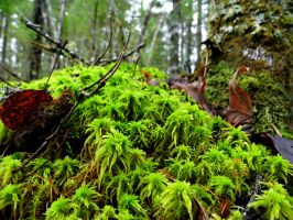 Forest Floor by flytier