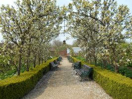 Stock - Blossom Archway by rockgem