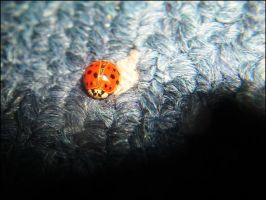 LadyBird by pety-ytep
