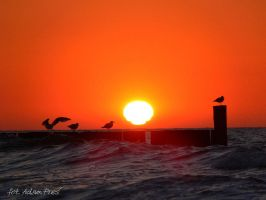 Seagull at the sunset. by Prezes01