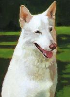 Filou, the white Dog by UytterhaegheDaniel