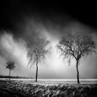 Three Birches Winter infrared by MichiLauke