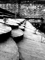 Berlin Plants on a roof by KaisiShu