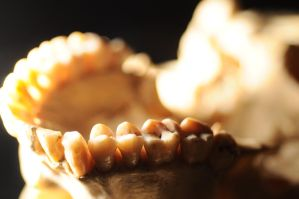 Human Skull macro teeth by Meddling-With-Nature