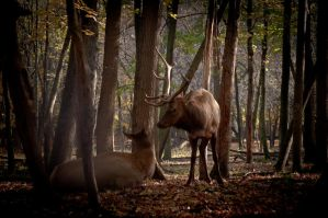 Elk in the Forest by runyouknow1