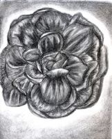 Charcoal Flower by sharmz