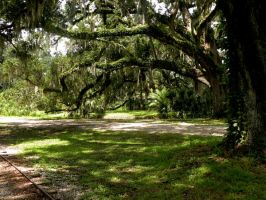 New Orleans City Park 12 by nevertakemystock