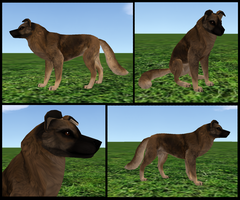 200pt Preset Leonberger by FlyWheel68