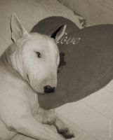 Steve-o The Bullterrier 5 by GremlinzTattoo