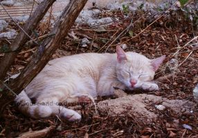 Sleeping outside by Toulouse-and-Co