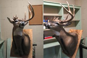 Whitetail 7 - Funky Buck WIP by DiamondDustTaxidermy