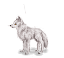 White wolf by RayCrystal
