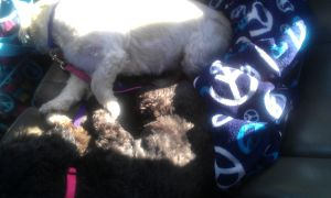 My Dogs Are Asleep In The Car by SkittleLove1997